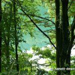 Bäume Wasser